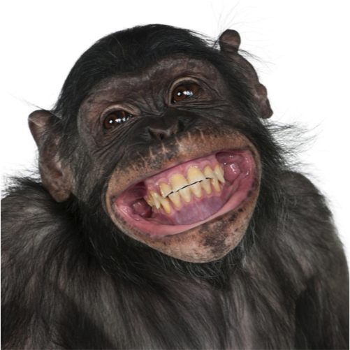 Happy_Monkey